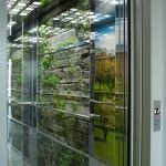 stena kabiny_priroda_2